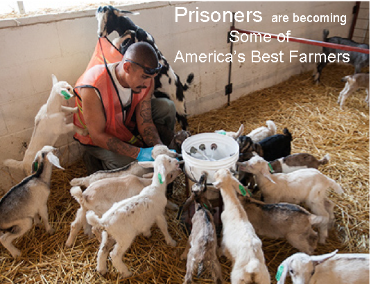Prisoners As Farmers