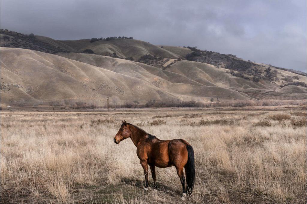 Wild Horse near Fort Tejon State Park